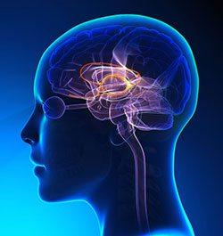 stress flow default mode network brain spencer coffman