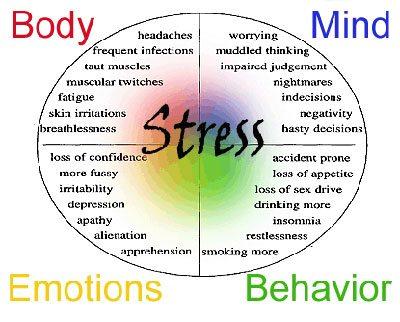 stress flow default mode network stress symptoms spencer coffman
